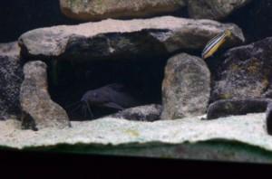 De favoriete grot van de verstopvis. Met dank aan Colin.