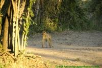 Malawi2009-04-29om18u19m02.jpg