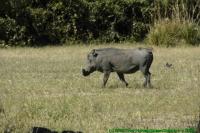 Malawi2009-04-30om11u06m09.jpg