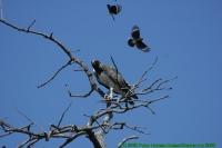 Malawi2009-04-30om11u26m32.jpg