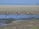 Mozambique 2002(0841).jpg