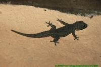 Malawi2009-05-01om13u25m27.jpg