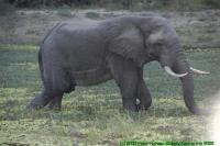 Malawi2009-05-01om18u36m40.jpg