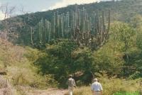 Mexico oktober 1990 - foto 131P.jpg