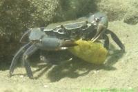 Malawi_2006-11-05_17.06.47_(DSCN5429)_Chisimulu_652.jpg