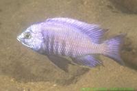 Malawi_2006-11-12_10.58.19_(DSCN5659)_663_Chiyankhwazi.jpg