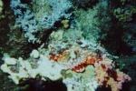 Sinai 1997 ION -060_640X480.jpg