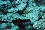 Sinai 1997 ION -071_640X480.jpg