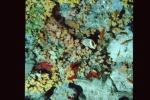 Sinai 1997 ION -079_640X480.jpg