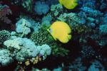 Sinai 1997 ION -080_640X480.jpg