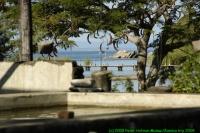 Malawi2009-04-25om16u04m53.jpg
