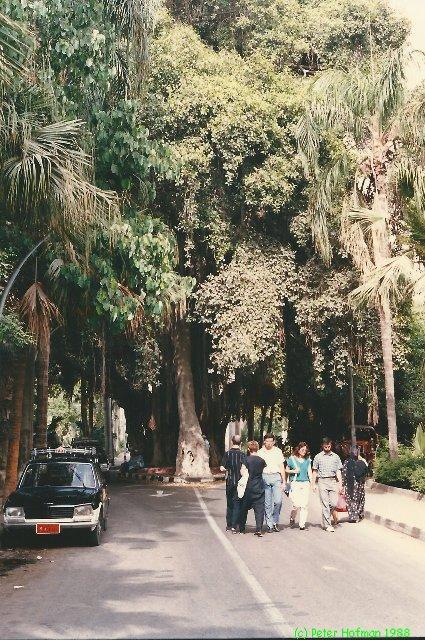 Egypte juni 1988 - foto 119P.jpg