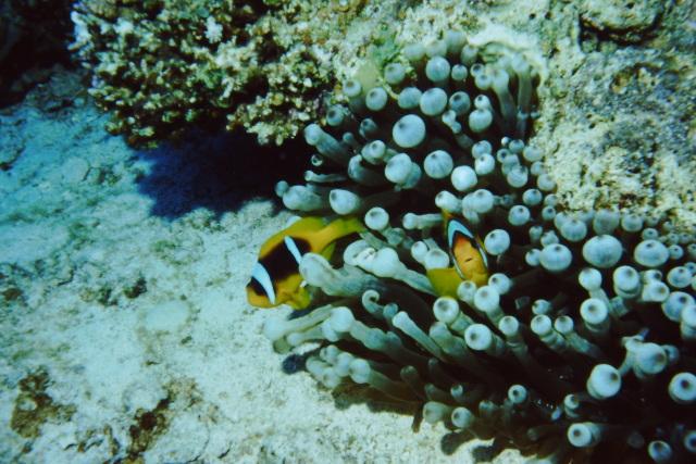 Sinai 1997 ION -012_640X480.jpg