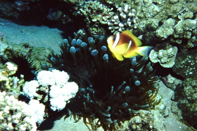 Sinai 1997 ION -029_640X480.jpg