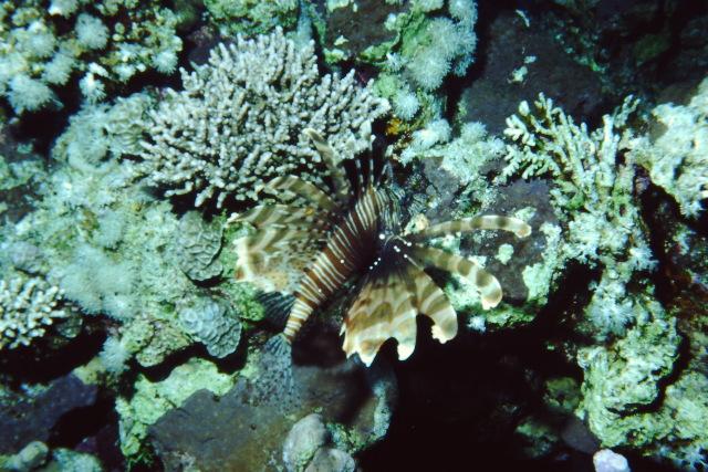 Sinai 1997 ION -032_640X480.jpg