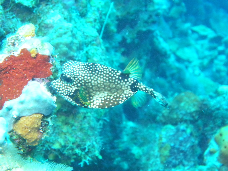 Bonaire 2018 05 05 - 21 04 36 (foto 3585).jpg