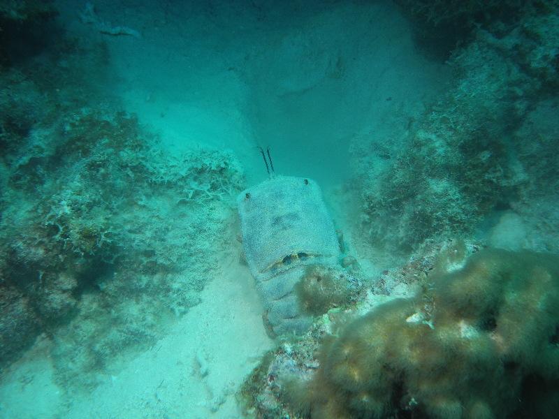 Bonaire 2018 05 06 - 20 07 32 (foto 3615).jpg