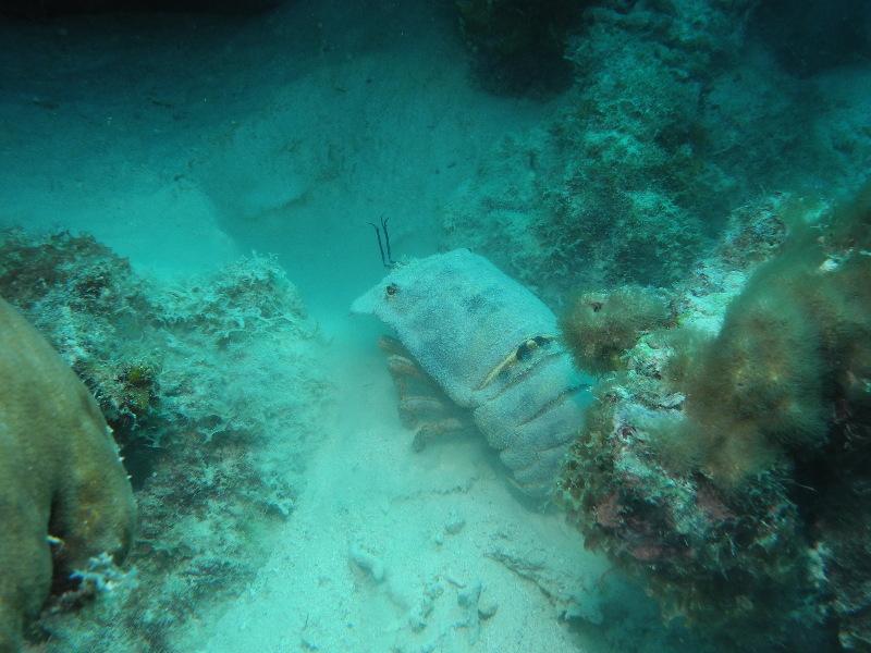 Bonaire 2018 05 06 - 20 08 34 (foto 3617).jpg