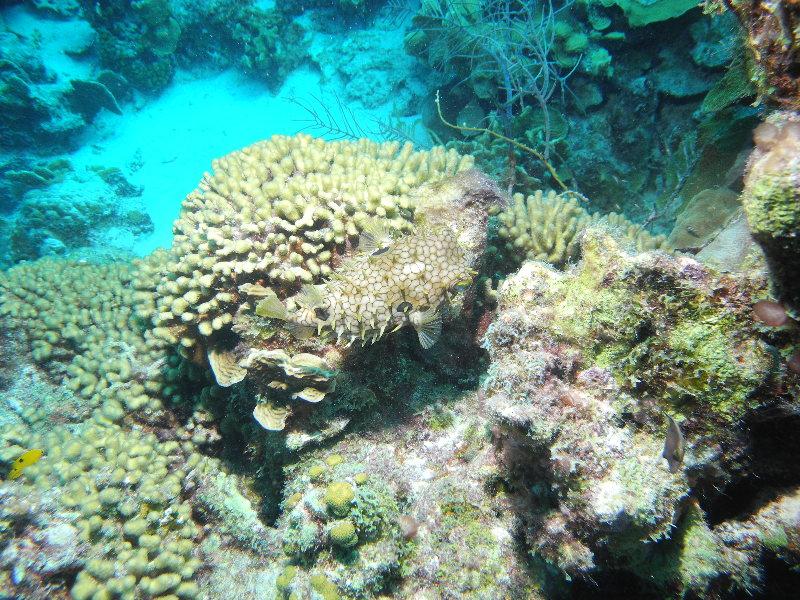 Bonaire 2018 05 06 - 20 18 44 (foto 3618).jpg