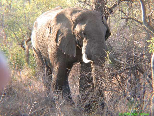 Mozambique-20020923.jpg