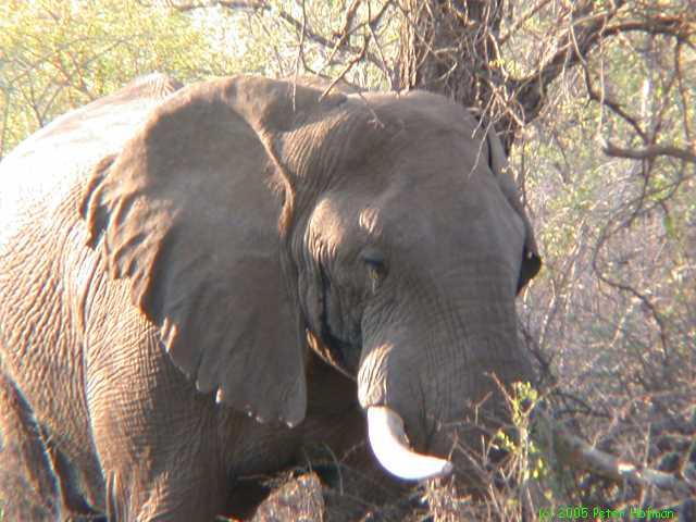 Mozambique-20020924.jpg
