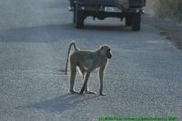 Malawi2009-04-30om08u03m06.jpg