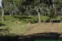 Malawi2009-04-30om09u16m39.jpg