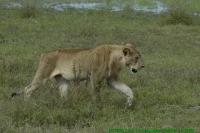 Malawi2009-05-01om10u01m29.jpg