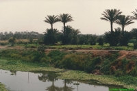 Egypte juni 1988 - foto 095P.jpg