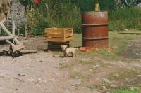 Mexico oktober 1990 - foto 132P.jpg