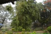 Malawi_2006-11-14_15.52.42_(_DSC6501)_Regentijd_is_begonnen.jpg
