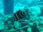Bonaire 2018 05 03 - 19 15 04 (foto 3523).jpg