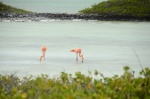 Bonaire 2018 05 04 - 20 18 49 (foto 6313).jpg