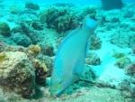 Bonaire 2018 05 05 - 19 43 15 (foto 3564).jpg