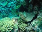 Bonaire 2018 05 06 - 20 19 06 (foto 3620).jpg