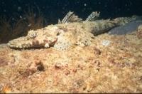 CrockodileFish.jpg
